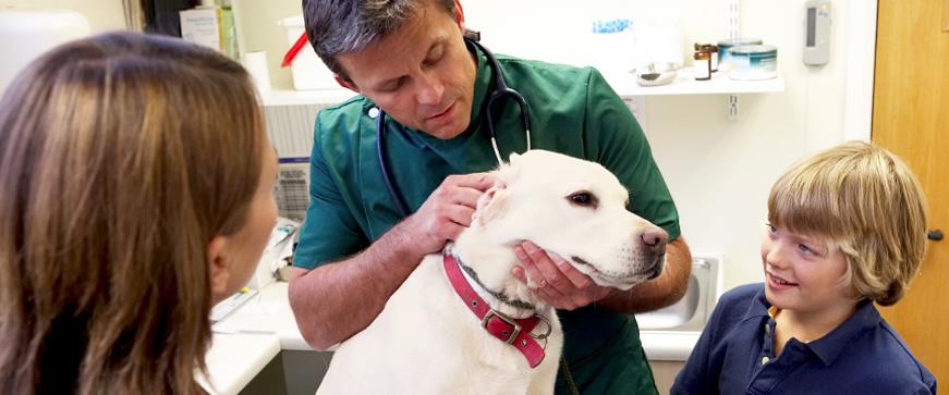 veterinary-practices2